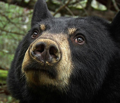 Lili-bear